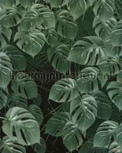 monstera on marble fotomurales Komar Pure p035-vd2