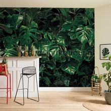 tropical wall fotobehang p333-vd4 Pure Komar