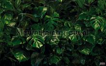 tropical wall fotomurales Komar Pure p333-vd4