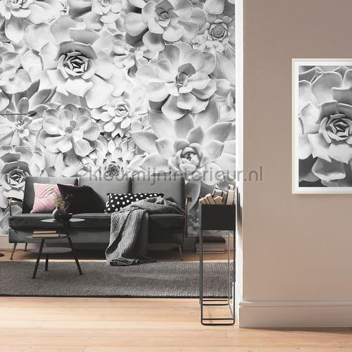 shades black and white fotobehang p962-vd4 Pure Komar