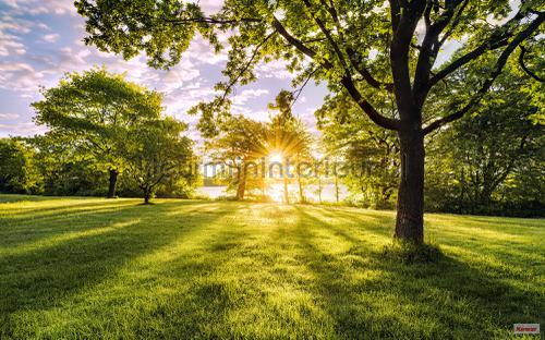 golden moment fotobehang psh054-vd4 Pure Komar