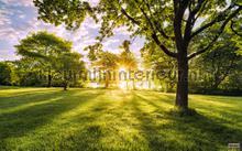 golden moment fototapet Komar Pure psh054-vd4