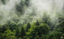 Forest land fotobehang Komar Bossen
