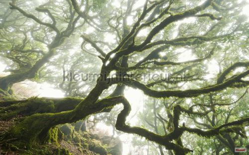 forgotten forest fotobehang psh092-vd4 Pure Komar
