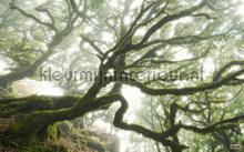 forgotten forest fotobehang Komar Pure psh092-vd4