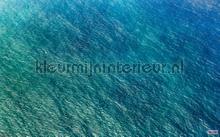 blaupause photomural Komar Pure psh096-vd4