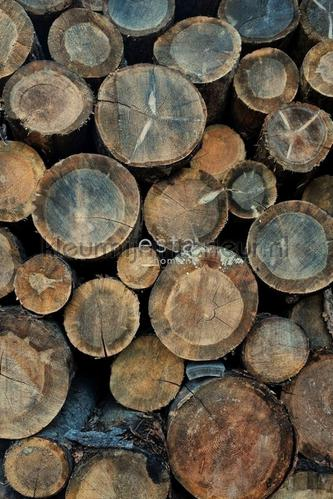 Boomstammen photomural 152-158206 wood Esta home