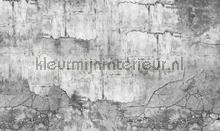 concrete wall fotobehang Noordwand Vanilla Lime 014334