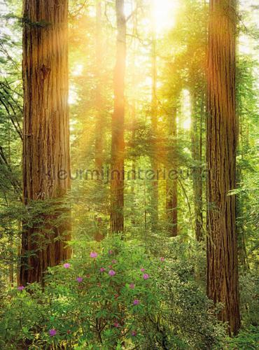 Redwood fotobehang XXL2-044 Vlies collectie Komar