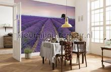 Provence fotobehang XXL4-036 Vlies collectie Komar