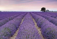 Provence fotobehang Komar Vlies collectie XXL4-036