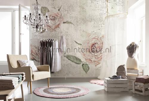 Tantinet papier murales XXL4-049 Flees collection Komar