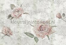 Tantinet fotobehang Komar Vlies collectie XXL4-049