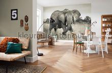 Elephant fotobehang XXL4-529 Vlies collectie Komar