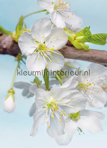 Blossom fototapet XXL2-033 Flees collection Komar