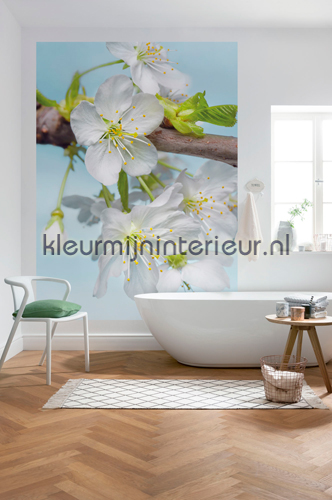 Blossom fotobehang XXL2-033 Vlies collectie Komar