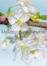 Blossom fotobehang Komar Vlies collectie XXL2-033