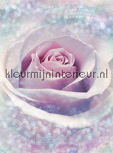 Delicate Rose papier murales Komar Vlies collectie XXL2-020