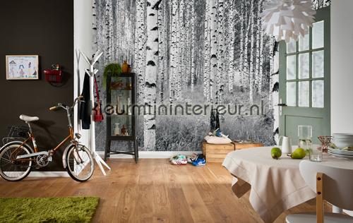 Woods fotobehang XXL4-023 Vlies collectie Komar