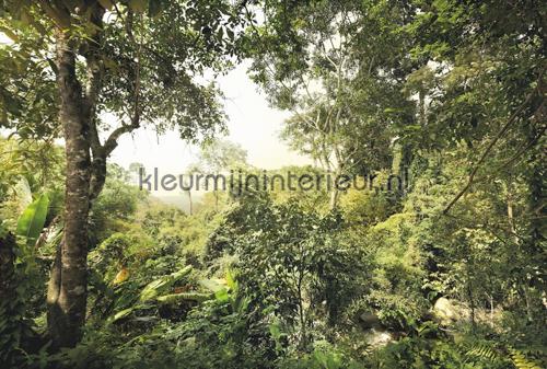 Dschungel fototapet XXL4-024 Flees collection Komar