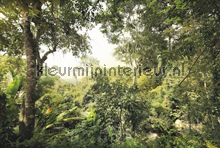 Dschungel fotobehang Komar Vlies collectie XXL4-024