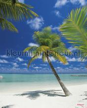 ari atoll photomural Komar Vol 15 4-883