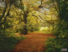 autumn forest fotomurales Komar Vol 15 8-068