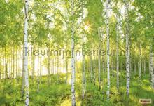 Sunday fototapeten Komar Wald