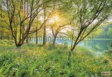 Spring lake fototapeten Komar Wald