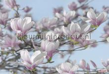 magnolia photomural Komar Vol 15 8-738