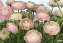 gentle rose fotomurales Komar Vol 15 8-894