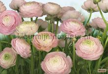gentle rose photomural Komar Vol 15 8-894