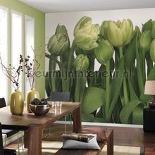 Tulips fotobehang Komar Bloemen Planten