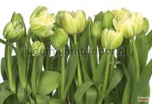 tulips photomural Komar Vol 15 8-900