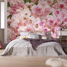 rosa photomural Komar Vol 15 8-937