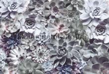 shades fotomurais Komar Vol 15 8-962