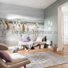 white horses photomural Komar Vol 15 8-986