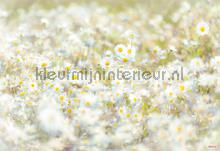 daisies photomural Komar Vol 15 8-994