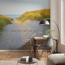 Sandy path fotobehang Komar Zon Zee Strand