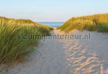 sandy path photomural Komar Vol 15 8-995