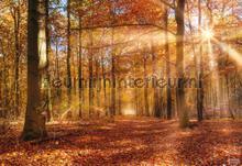 Golden dawn fotobehang Komar Bossen