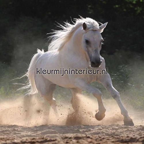 Paarden Behang Posterbehang.Paard