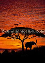 african sunset fotobehang Komar National Geographic 4-501