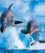 Dolphins fotobehang dieren