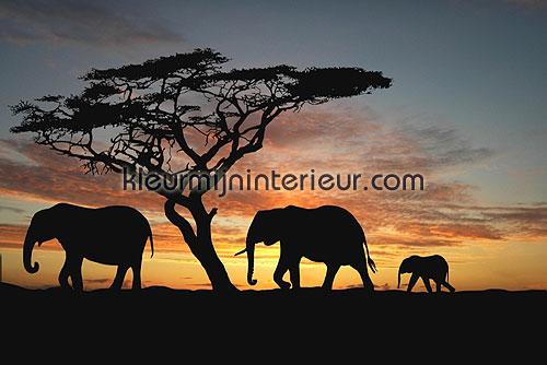 olifanten fotobehang 70002 Digiwalls Dutch Wallcoverings