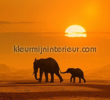 olifant in de zon fotobehang Dutch Wallcoverings Digiwalls 70011