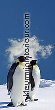 pinguins rechts fotobehang Dutch Wallcoverings Digiwalls 70026