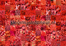 Red papier murales AS Creation XXL Wallpaper 0331-3