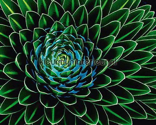 Senecio Nivalis fotomurais 00901 Ideal-Decor Vlies Ideal Decor