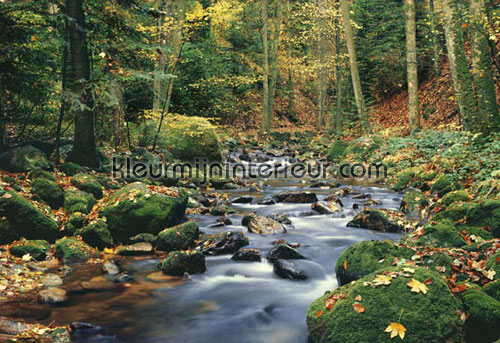 forest stream fotobehang 278 Ideal-Decor Poster Ideal Decor